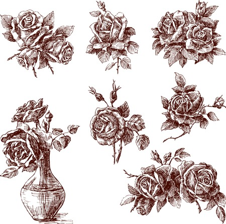 The vector drawing of the different roses.