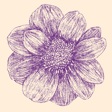 The vector drawing of a garden flower.