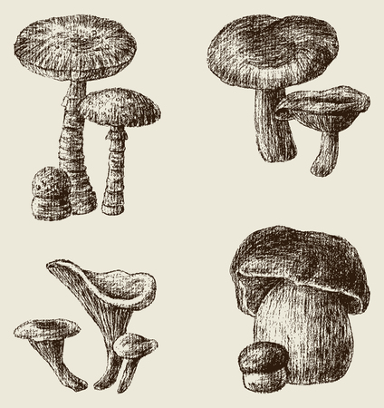 sponge mushroom: The vector drawings of the different mushrooms.