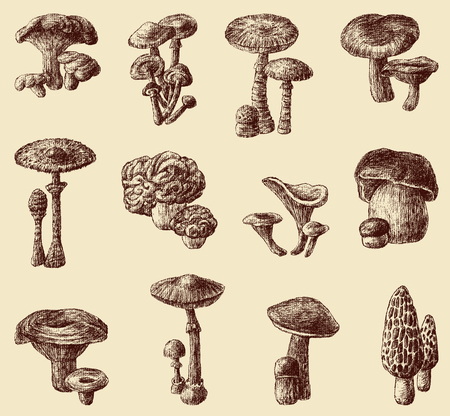 The vector drawings of a different mushrooms.