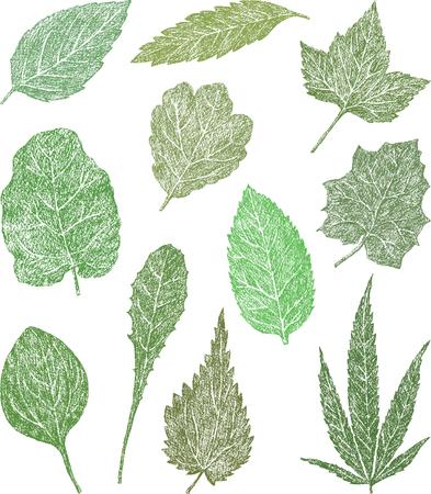 De vector tekening van de verschillende bladeren van de grasplanten. Stock Illustratie