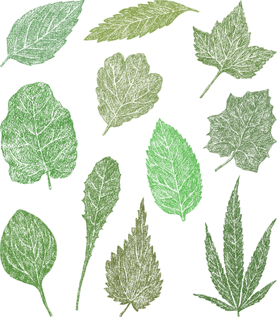 The vector drawing of the various leaves of the grass plants.