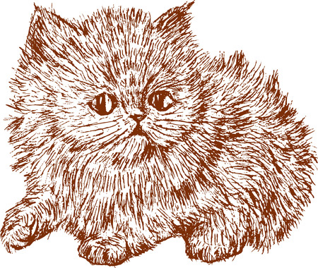 shaggy: The vector drawing of a fluffy kitten.