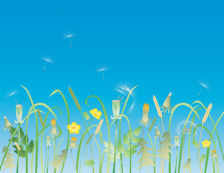 The vector image of the meadow flowers in the summer. Illustration
