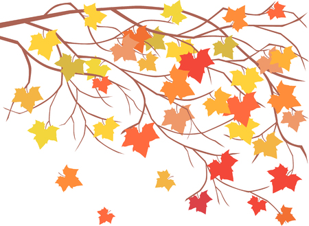 The vector image of a maple branch in the autumn. Illustration