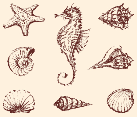 botton: Vector drawings of the different sea creatures.