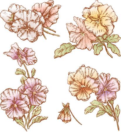 Il disegno vettoriale di un fiori in stile di uno schizzo. Archivio Fotografico - 80631009