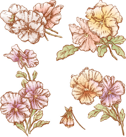 The vector drawing of a flowers in style of a sketch. Иллюстрация