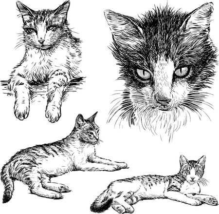 Vector sketches of the house cats.