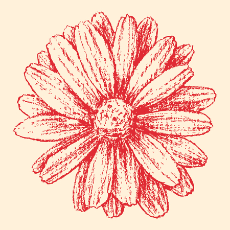 chamomile flower: Vector image of a red garden.