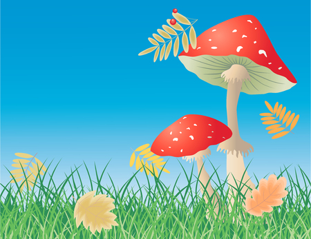 The vector image of the poisonous mushrooms and the autumn leaves. Illustration