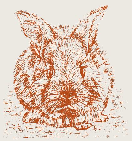 De vectortekening van een droevig konijn.