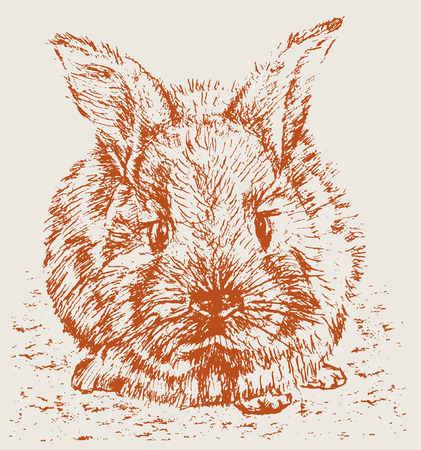 The vector drawing of a sad rabbit. 向量圖像