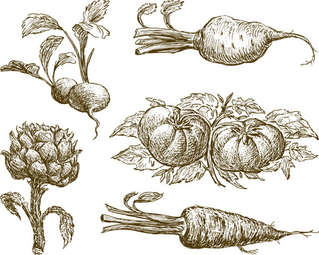 Vector image of the different vegetables. Illustration