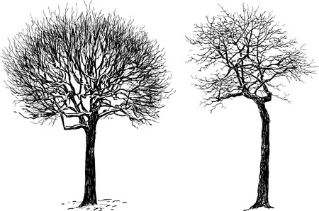 Vector image of the silhouettes of two trees. Illustration