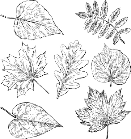 The vector drawing of the leaves of the different trees.