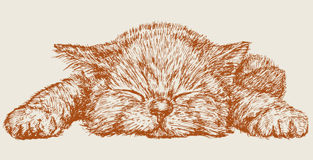 The vector drawing of a sleeping kitten in style of a sketch. Vectores