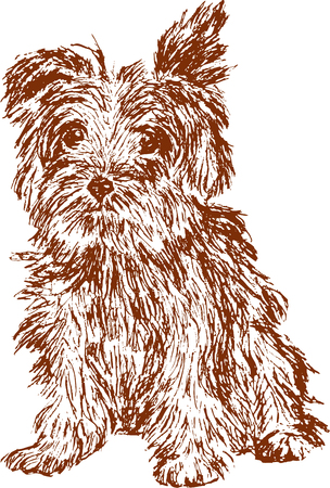 shaggy: Vector drawing of a puppy in style of a sketch.