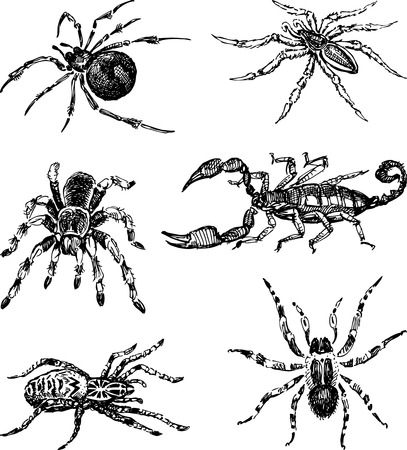 The vector drawing of a different spiders. Ilustração