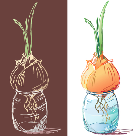 The vector image of the onions sprouting in a glass pot, drawn by a colour pencil. Ilustração