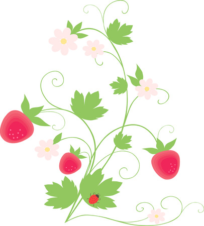 The vector image of a bush of wild strawberry with ripe berries and a ladybird on a leaf.