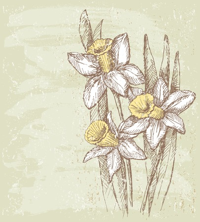 The vector image of the narcissuses bouquet.