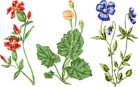 別の野生の花のベクトル画像  イラスト・ベクター素材