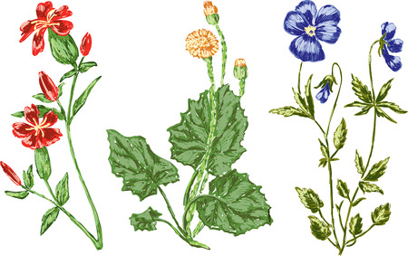 Vector image of the different wild flowers