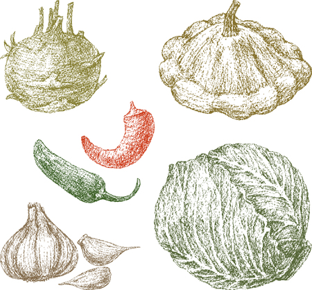 The hand-drawings of the various ripe vegetables