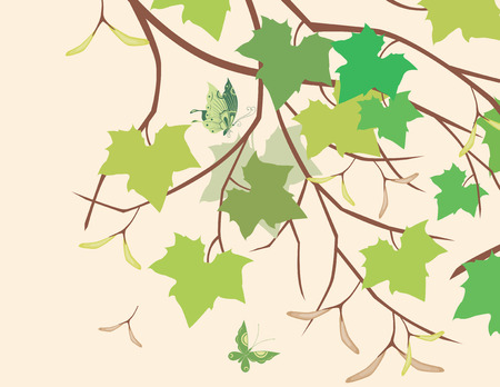 The vector image of a branch of a maple in summer time
