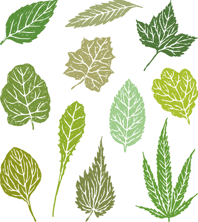 The collection of the leaves of the different herbal plants