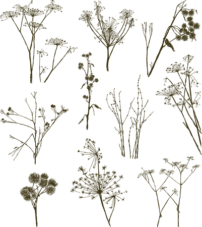 The collection of the different dry wildflowers