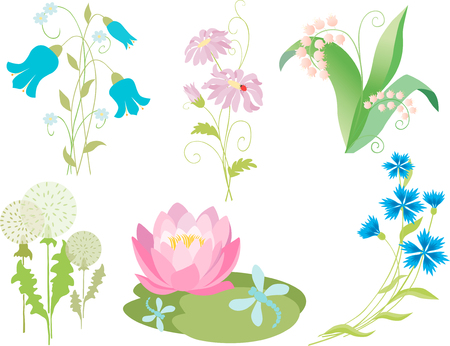 The set of the different wildflowers