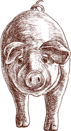 Sketch of a funny eared pig