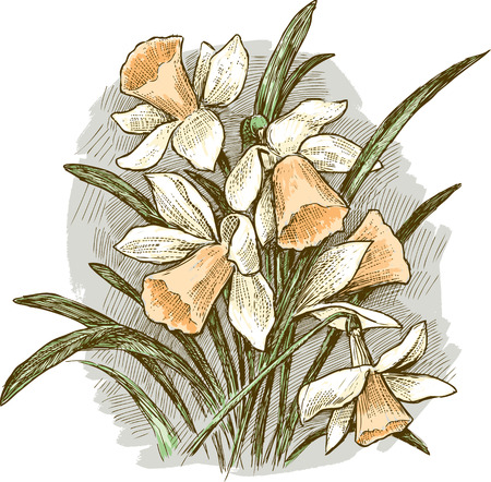 Vector image of the narcissus bouquet Illustration