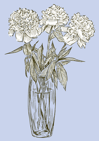 Vector illustration of the peonies in the vase