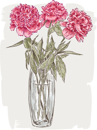 Vector illustration of the peony bouquet in the vase