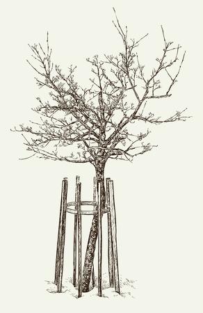 Vektorbild eines jungen Baums im Frühjahr