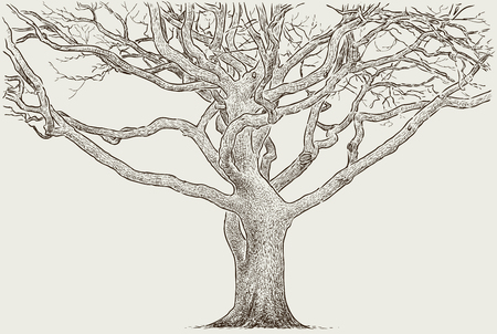 Sketch of a trunk of an old tree illustration. Çizim