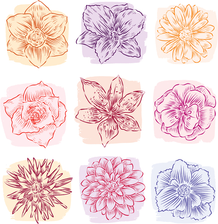 Sketches of the different garden flowers