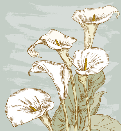 Vector illustration of the bouquet of the calla lilies