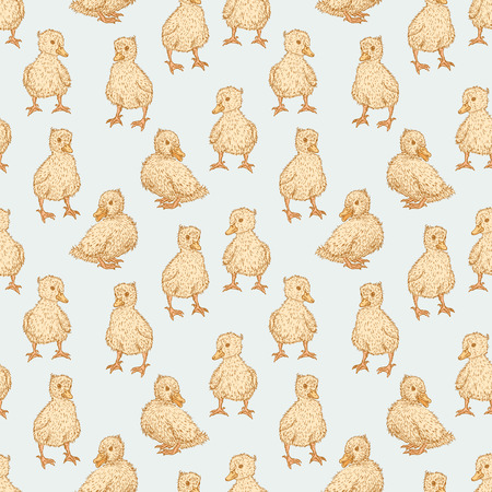 chick: Vector pattern of the little ducks.