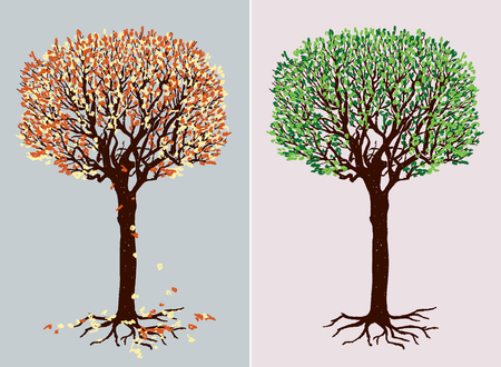 Vector illustration of a deciduous tree in the different seasons