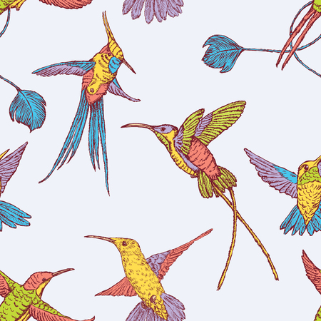 Vector background of the different flying hummingbirds Illustration