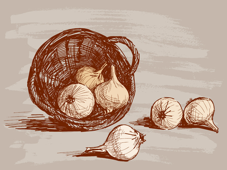 Vector drawing of the onions crop.