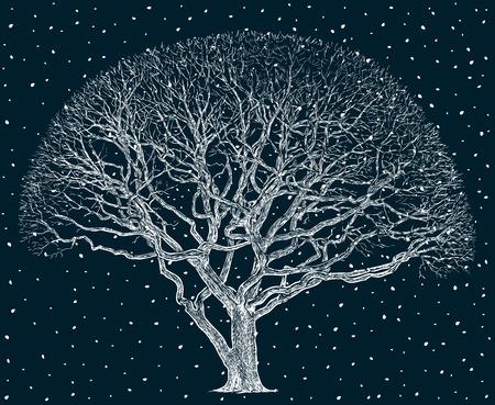 Vector image of an oak tree in winter Illustration