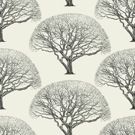 Vector background of the silhouette of a maple tree