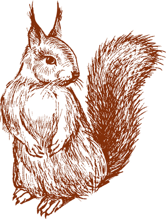 Sketch of a red forest squirrel
