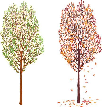A deciduous tree in the different seasons