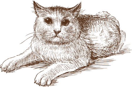 Sketch of a scared house cat